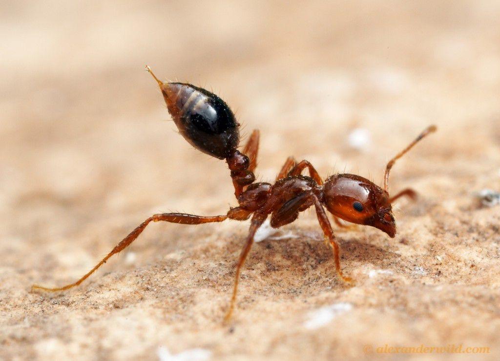 除虫公司,可信的红火蚁防治公司当属桥信白蚁公司
