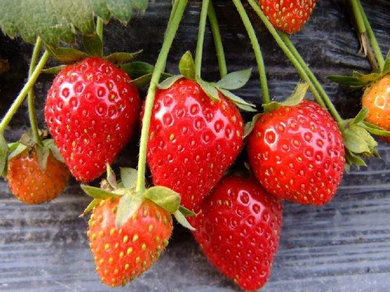 水果采摘园的经营模式
