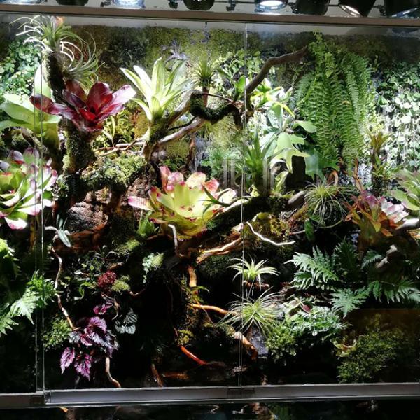雨林主题餐厅