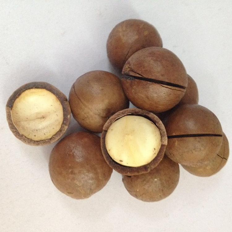 福建靠谱的坚果夏威夷果供应厂家-上海的夏威夷果批发供应