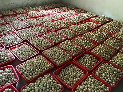 肇庆知名的鹧鸪蛋供应商,鹧鸪蛋