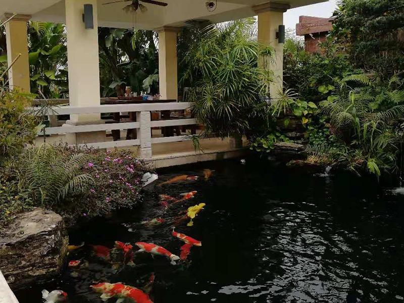 广东鱼池假山凉亭花架制造哪家实力可靠|鱼池水过滤器