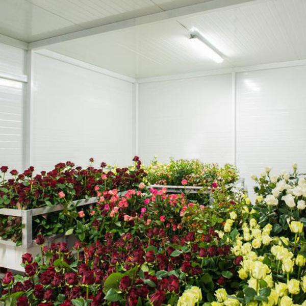 鲜花冷库设备