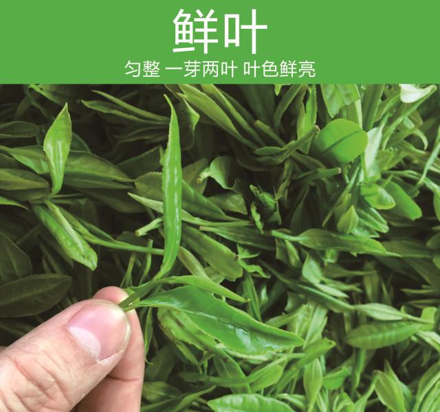 广西农产品之绿茶