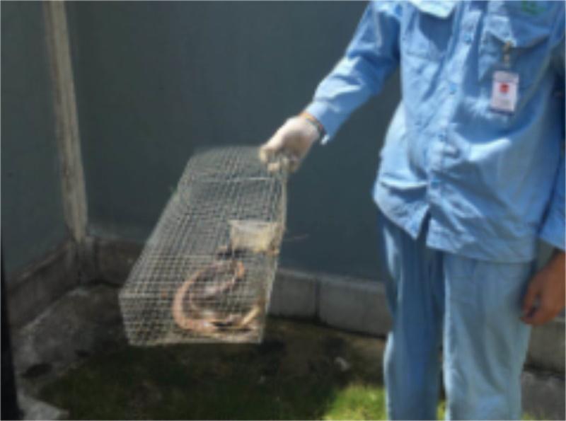 广东靠谱的蛇类防治公司当属桥信白蚁公司,叫一次灭鼠公司多少钱