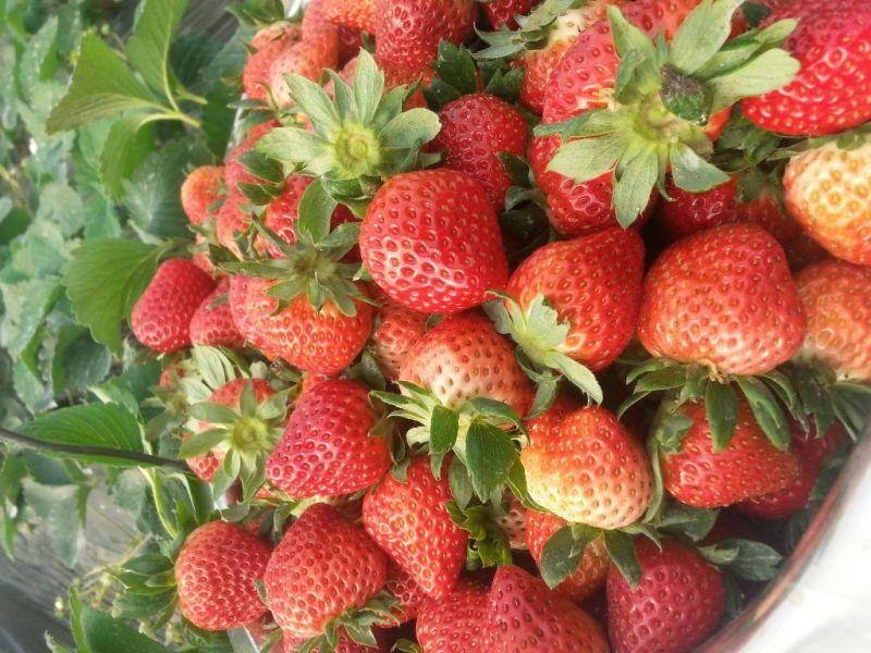 冬季选购草莓小技巧