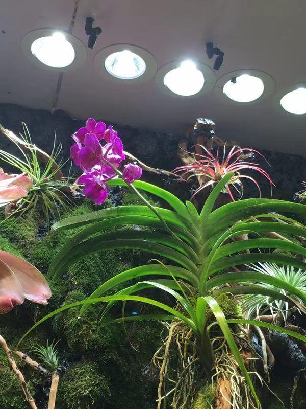 雨林缸景观