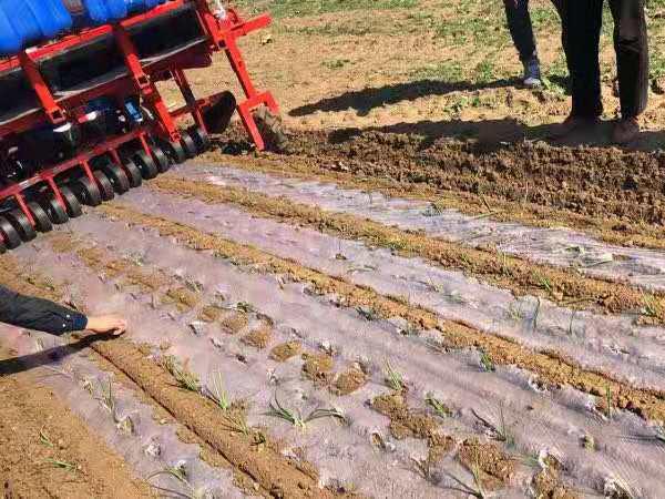 超值的栽苗機承棠農業裝備供應_洋蔥栽苗機訂制