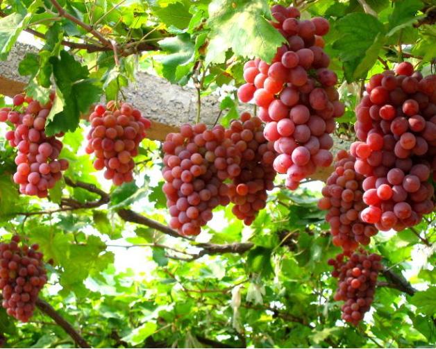十一月葡萄保鲜冷库安装要多少钱