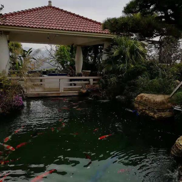 鱼池专业水过滤系统