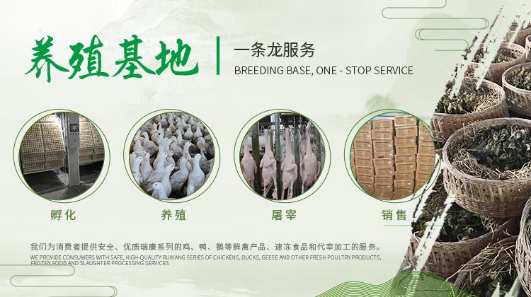 金定鸭苗的养殖注意事项以及质量好的鸭苗的选择
