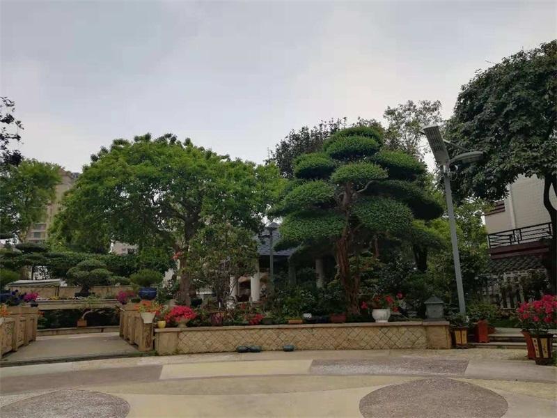 别墅小花园天台设计可以种植的植物花卉及顶层露台温室效果图