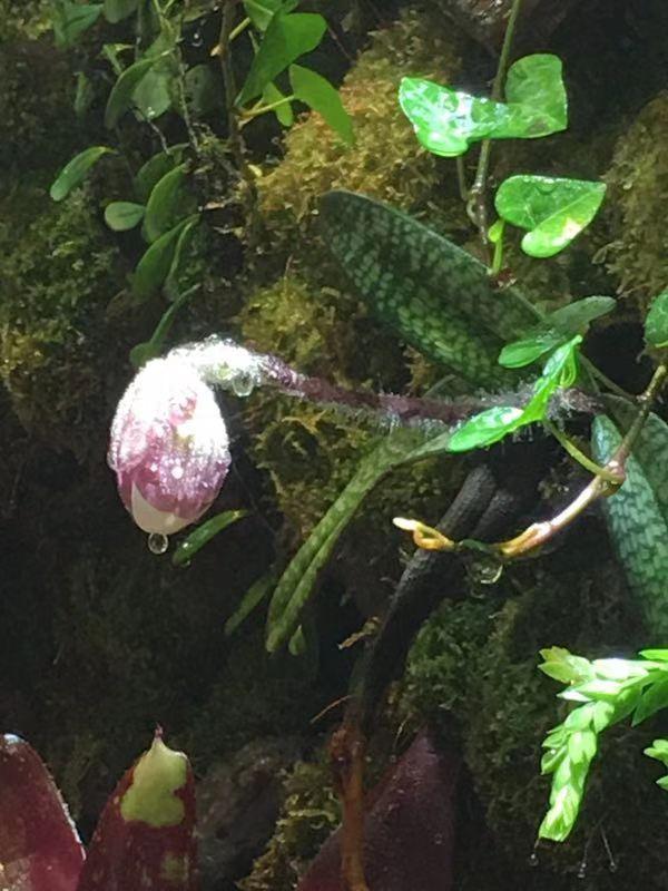 水陆缸造景植物