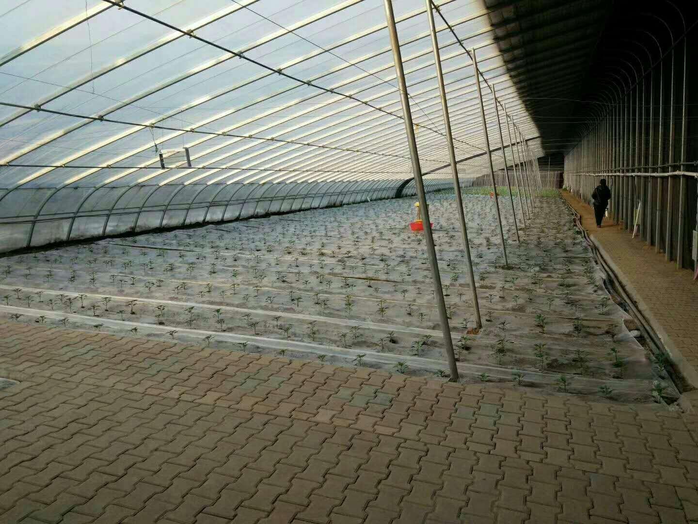 承建温室工程