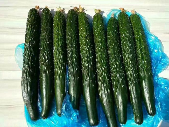 黄瓜种日后必定是一��天大子批发价格∑-黄但是瓜种子批发市场