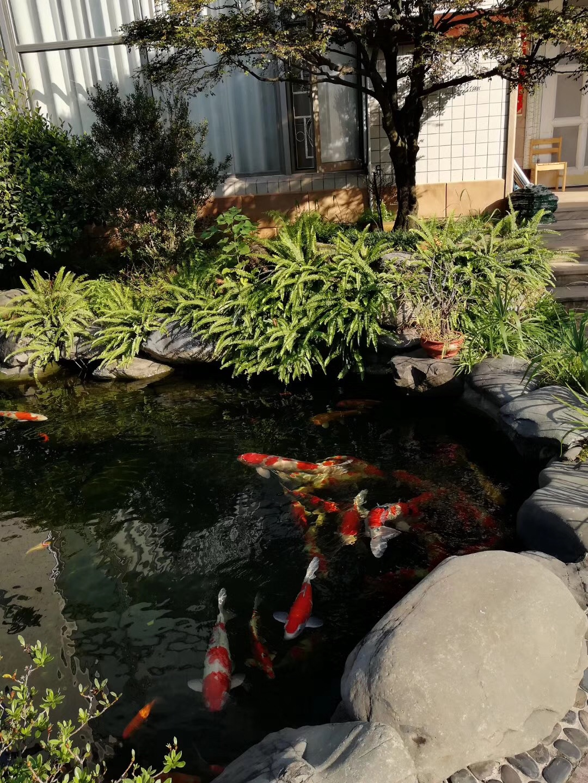花园整体规划设计施工