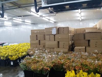 鲜花冷库工程温度维持在多少合适