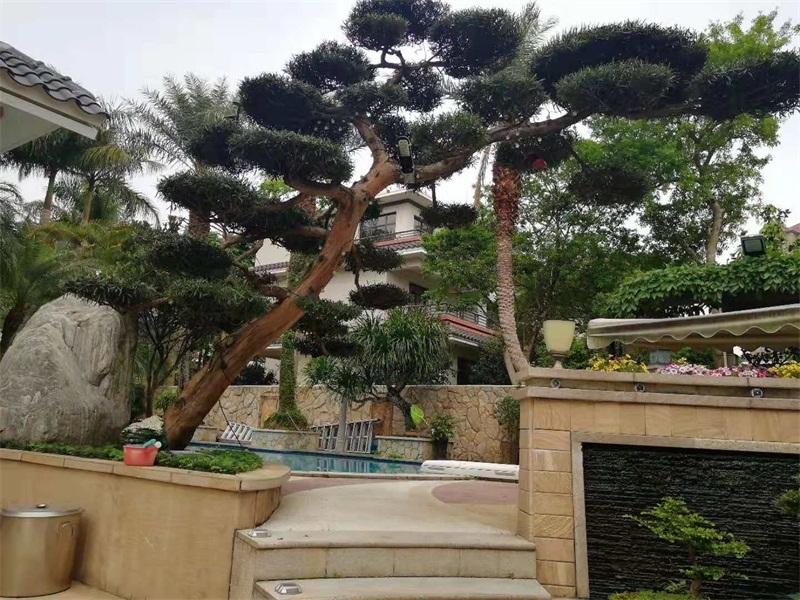 天台花园设计和运用及小型庭院设计有哪些要素
