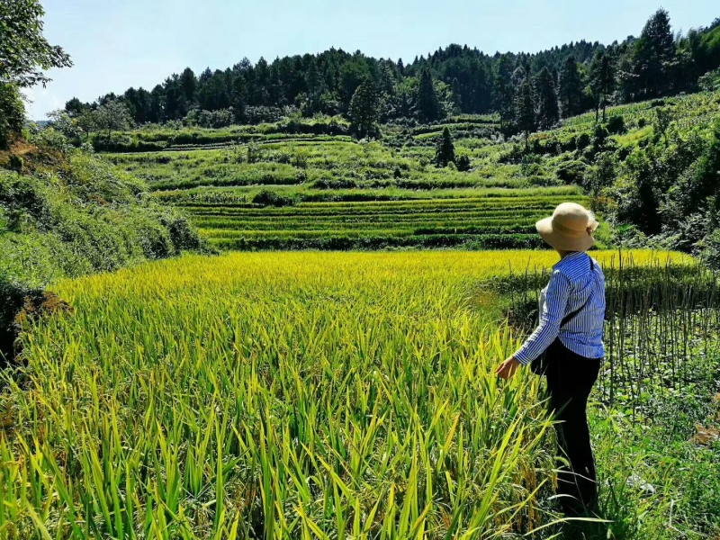 农家乐住宿是否需要特种行业许可证>                     </div>                     <p class=