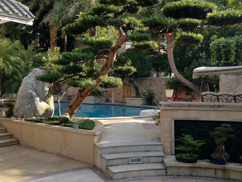良好口碑的花园整体规划设计施工推荐-泳池设计专家