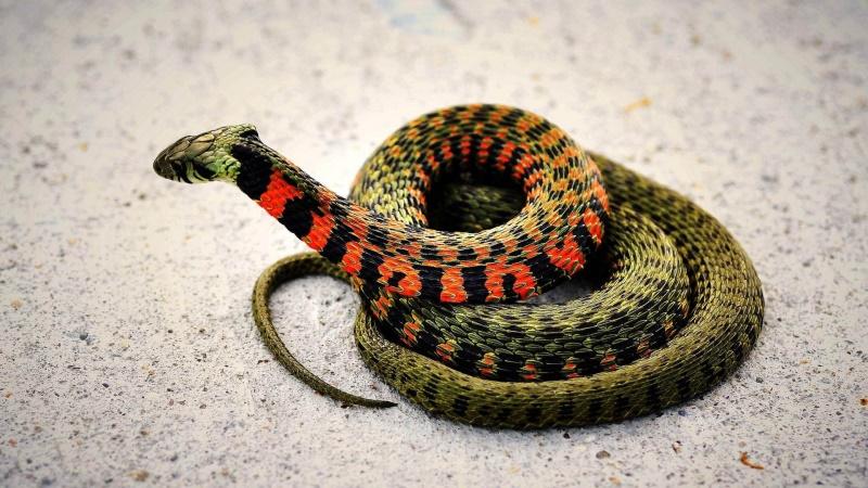 想找服务好的蛇类防治,就来桥信白蚁公司-除白蚁多少钱