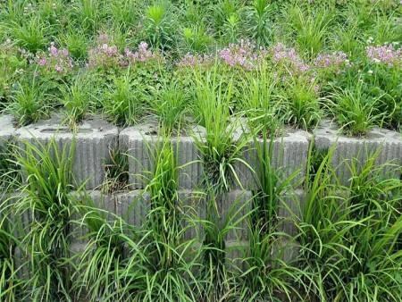 挡土墙植草式价格