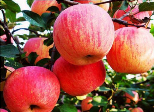 苹果保鲜冷库价格怎么算?