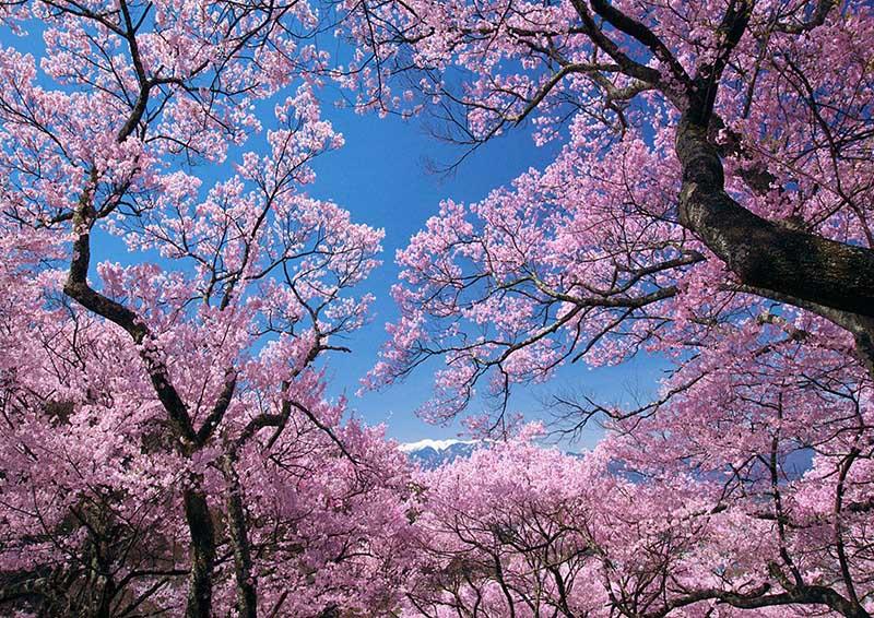 樱花园项目定位