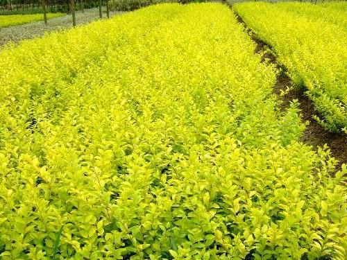 绿化苗木有什么功能?