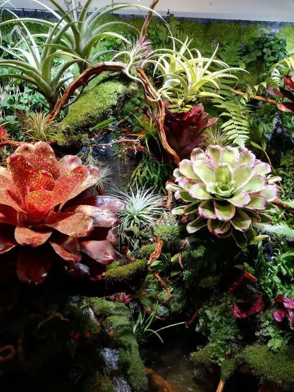 植物背景墙