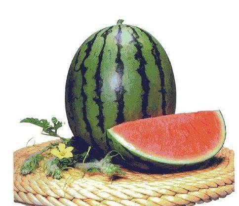 西瓜采摘基地讲述西瓜的需肥特性和施肥要点