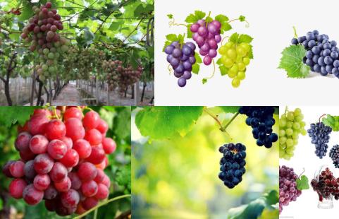 重庆草莓采摘分享葡萄的功效与作用
