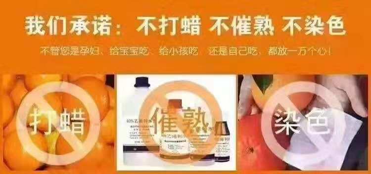 采购富川脐橙就找贺州市爱上芗籿 贺州富川脐橙代理商