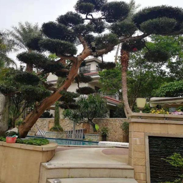 各种风格的天台花园设计对比及施工的方法是什么