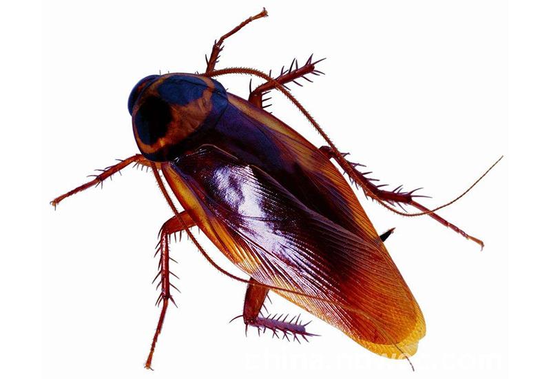 桥信白蚁公司-专业的蟑类防治服务提供商 灭白蚁防治
