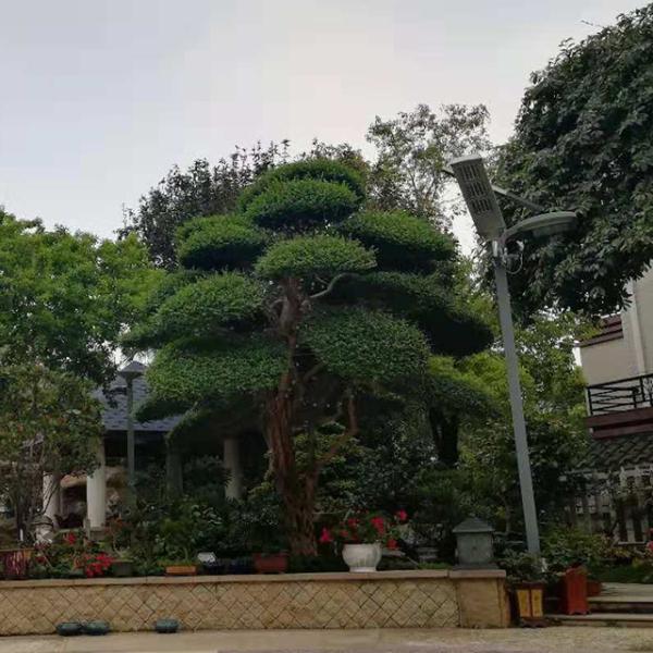 天台花园设计施工装修怎么做效果好及费用大概要多少钱