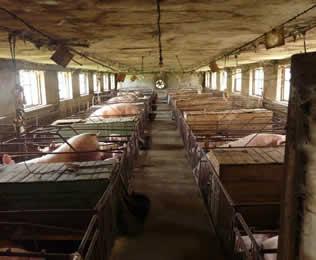 养猪场生物除臭剂招商-广东声誉好的卓冠牌复合型生物除臭剂供应商