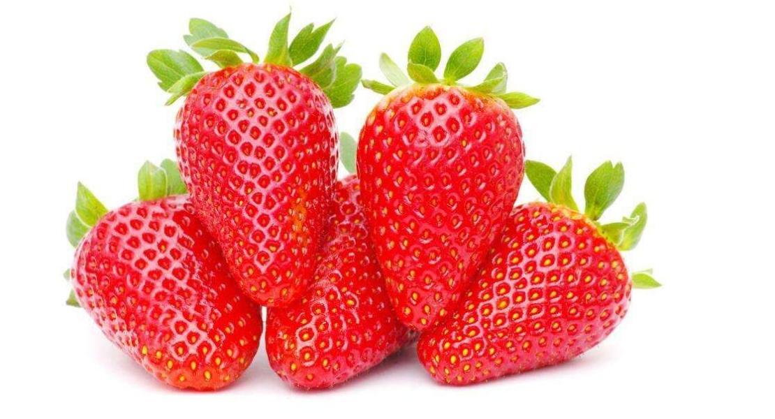 草莓采摘之草莓的发育特点