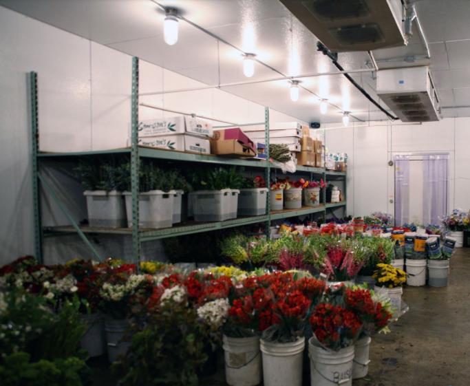廣州雪霸制冷提供質量好的鮮花保鮮冷庫 鮮花保鮮冷庫哪家好
