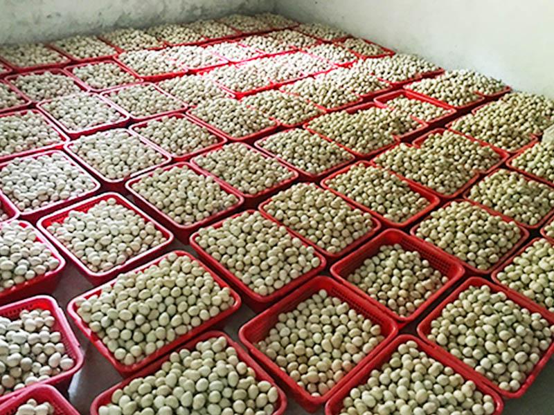 高质量的鹧鸪蛋出售推荐|广东鹧鸪批发