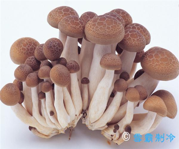 食用菌(蘑菇)冷库贮藏温度是多少