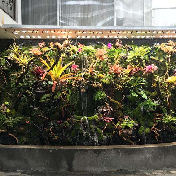 热带雨林景观