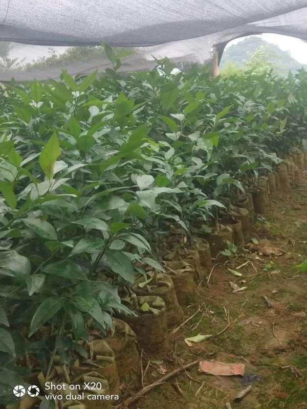 农产品服务平台