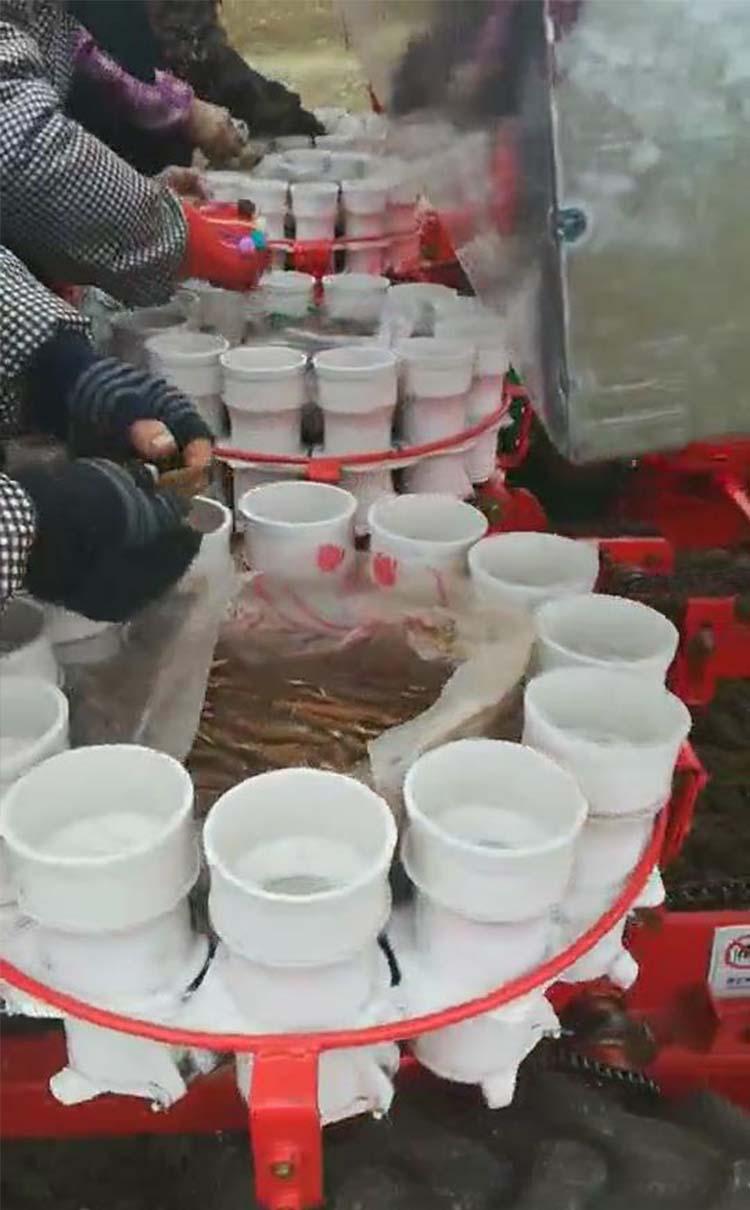 2019年香港四不像正版_四行赤芍种植机