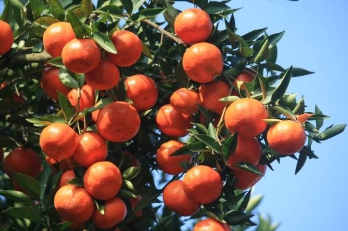 冬季水果采摘攻略