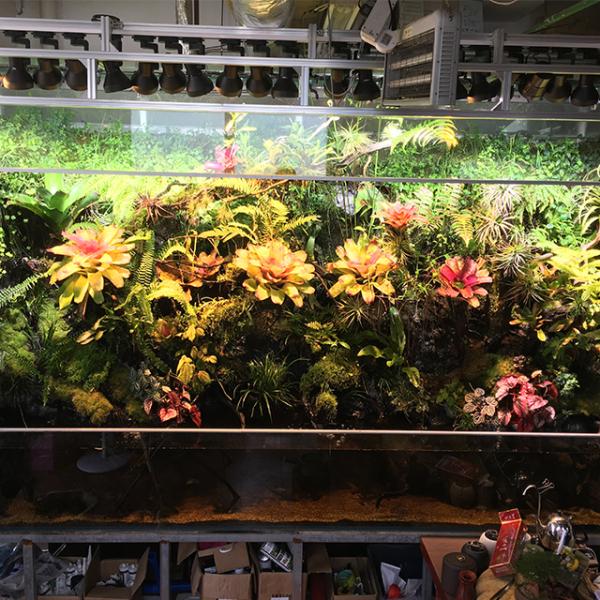 生态雨林缸