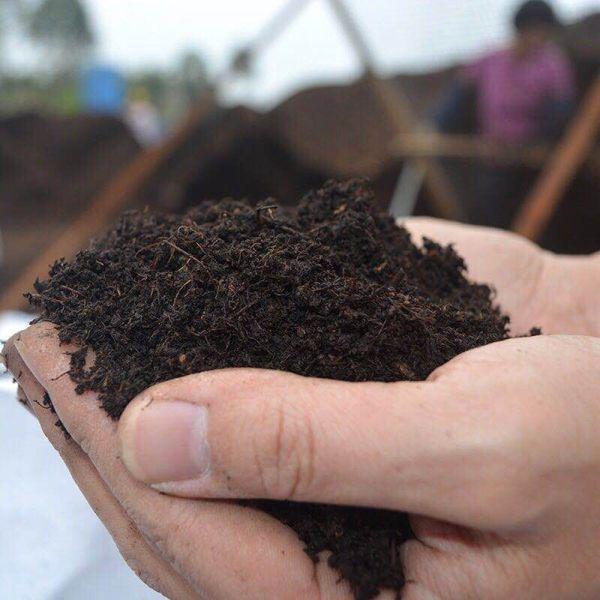广东草炭土厂家用于盆栽种植的泥炭土